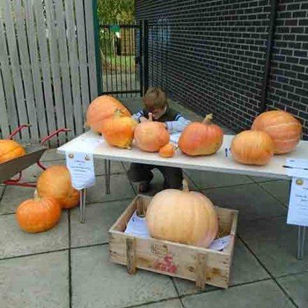 Gardening Club – Giant pumpkin success
