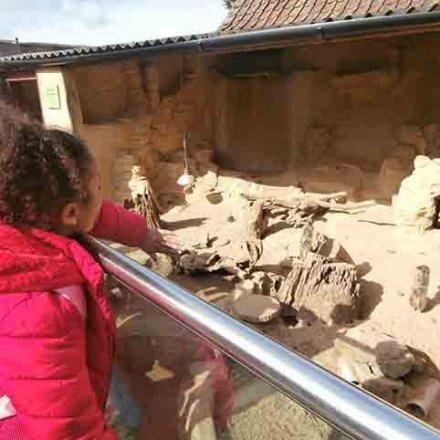 Visit to Noah's Ark Zoo Farm – Y3
